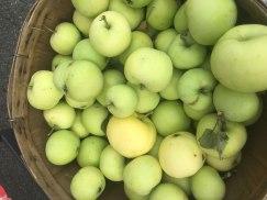 almonte-farmers-market_Photo 2018-08-04, 9 06 08 AM