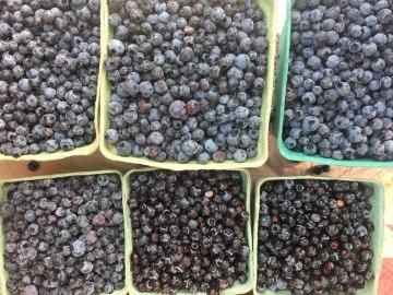 almonte-farmers-market_Photo 2018-08-18, 9 29 03 AM