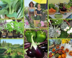 Produce grown by Earth's Mirth